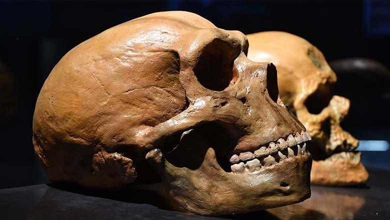 Nouvel éclairage sur l'histoire de l'homme de Néandertal et de l'Homo sapiens